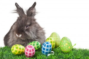 raising-rabbits-easter-bunny